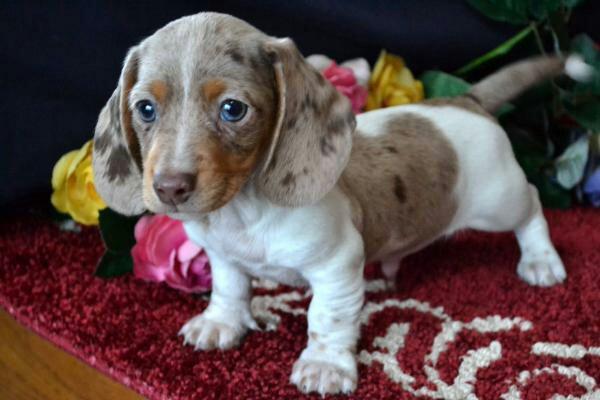 10 productos del hogar que podrían causar la muerte de tu perro en caso de ingesta